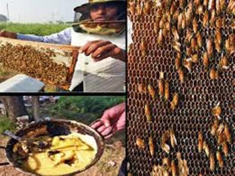 Subsidy on bee keeping