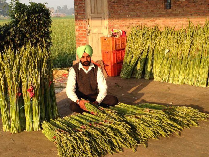 Successful Flower Producer
